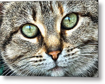 The Eyes Have It Metal Print by Kenny Francis