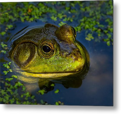 Metal Print featuring the photograph The Eyes Have It by Steve Zimic