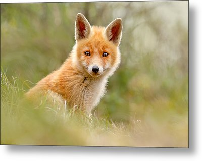 The Face Of Innocence _ Red Fox Kit Metal Print by Roeselien Raimond