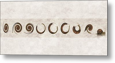 The Failed Evolutionary Spin Cycles Of The Snail Metal Print by Andy Walsh