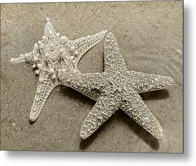 The Family Asteriidae Metal Print