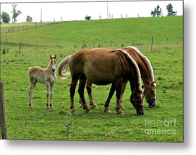 The Family Of Three. Metal Print by Penny Neimiller