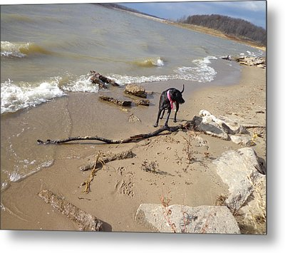 The Find Metal Print by Jacque Hudson