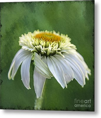 The First Coneflower Metal Print by Terry Rowe