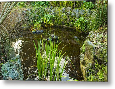 Metal Print featuring the photograph The Fish Pond  by Naomi Burgess