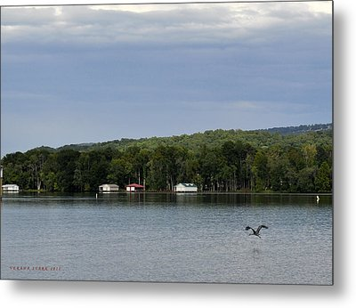 The Flight Of The Great Blue Heron Metal Print by Verana Stark