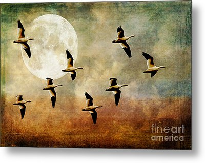 The Flight Of The Snow Geese Metal Print