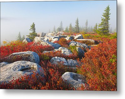 The Fog Clears At Dolly Sods Metal Print by Bill Swindaman
