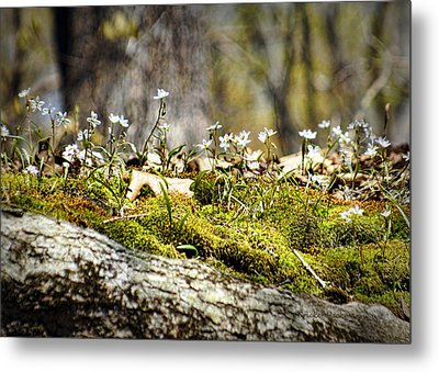 The Forest Floor Metal Print by Cricket Hackmann