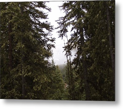 The Forest Metal Print by Yvette Pichette