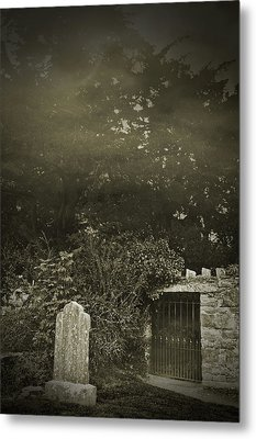 The Fortingall Yew Metal Print by Jane McIlroy