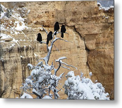 Metal Print featuring the photograph The Four Crows by Laurel Powell