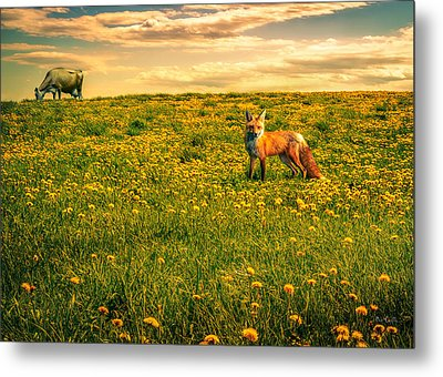 The Fox And The Cow Metal Print by Bob Orsillo