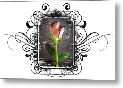 The Framed Rose Metal Print by Mauro Celotti