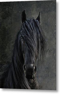 The Frisian Metal Print by Joachim G Pinkawa