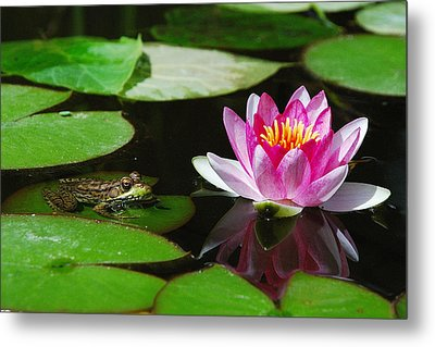 The Frog And The Lily Metal Print
