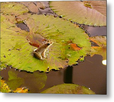 Metal Print featuring the photograph The Frog by Evelyn Tambour
