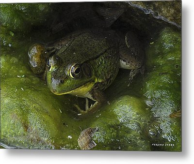 The Frog Metal Print by Verana Stark
