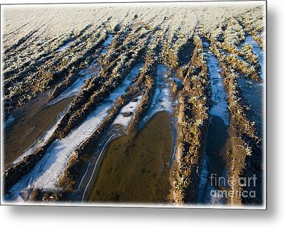 The Frozen Earth Metal Print by Liz  Alderdice