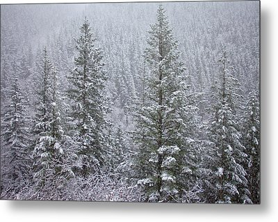 The Frozen Forest Metal Print