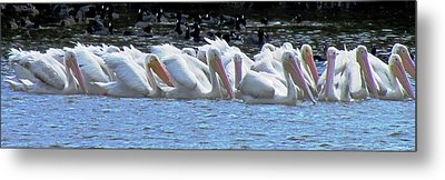 The Gathering 2 Metal Print by Will Boutin Photos