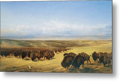 The Gathering Of The Herd Metal Print by William Jacob Hays