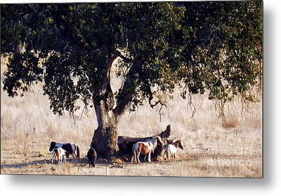 The Gathering Tree Metal Print