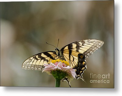 The Glow Through Nature Stain Glass Metal Print by Donna Brown