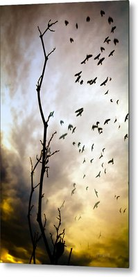 The Gods Laugh When The Winter Crows Fly Metal Print