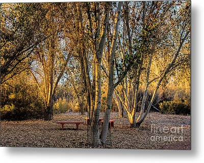 The Golden Hour Metal Print by Tammy Espino