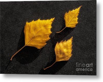 The Golden Leaves Metal Print by Veikko Suikkanen