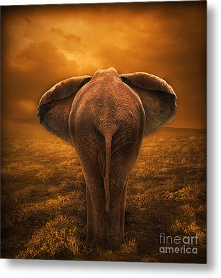 The Golden Savanna Metal Print by Lynn Jackson