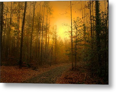 The Golden Touch Of Autumn Metal Print by Nina Fosdick
