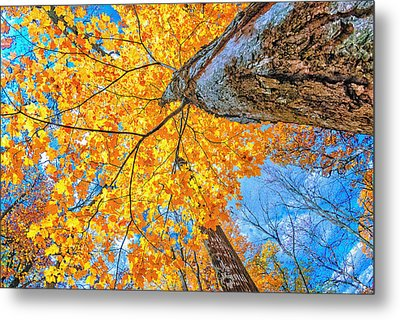 The Gorgeous Fall Metal Print by Kimberleigh Ladd