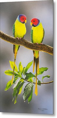 The Gorgeous Guys - Plum-headed Parakeets Metal Print by Frances McMahon