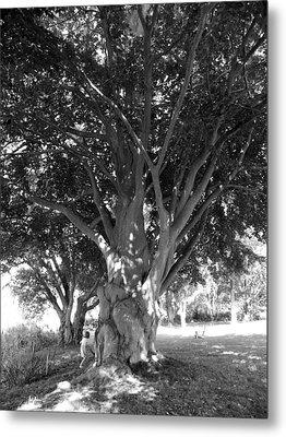 The Grandmother Tree Metal Print