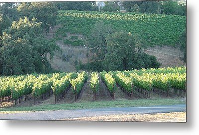 Metal Print featuring the photograph The Grape Lines by Shawn Marlow