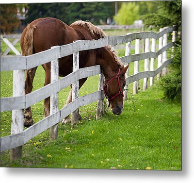 The Grass Is Always Greener Metal Print by Jeff Ross