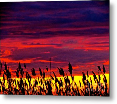 The Grasses Reach  Metal Print by Q's House of Art ArtandFinePhotography