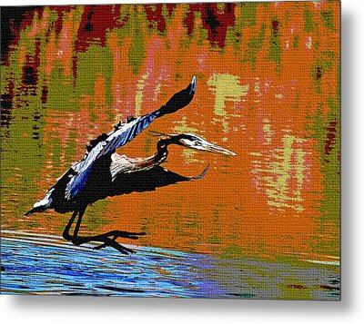 Metal Print featuring the photograph The Great Blue Heron Jumps To Flight by Tom Janca