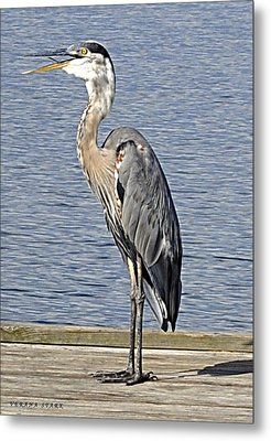 The Great Blue Heron Photo Metal Print by Verana Stark