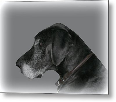 The Great Dane Metal Print by Barbara S Nickerson