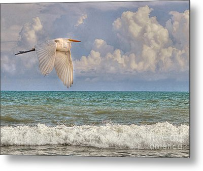The Great Egret And The Ocean Metal Print