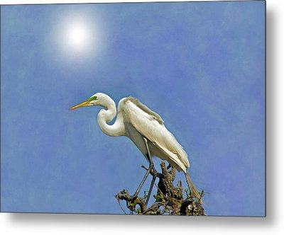 The Great Egret Metal Print by Marion Johnson