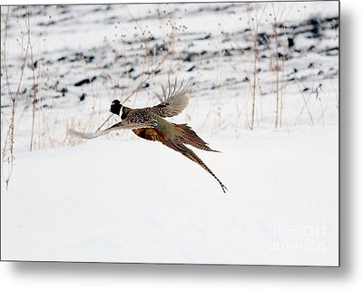 The Great Escape Metal Print by Lori Tordsen