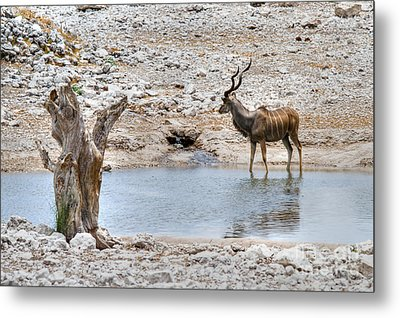 Metal Print featuring the photograph The Great Kudu  by Juergen Klust