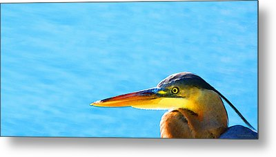 The Great One - Blue Heron By Sharon Cummings Metal Print