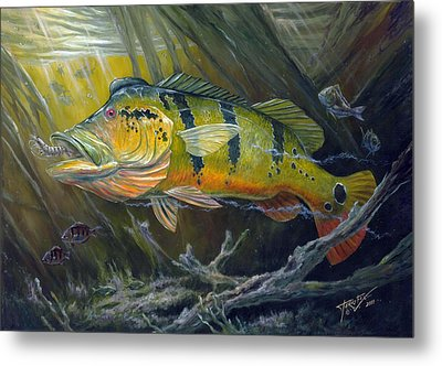 The Great Peacock Bass Metal Print