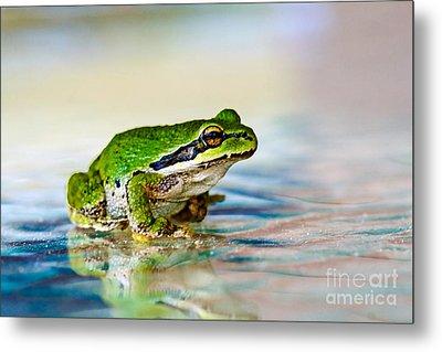 The Green Frog Metal Print by Robert Bales