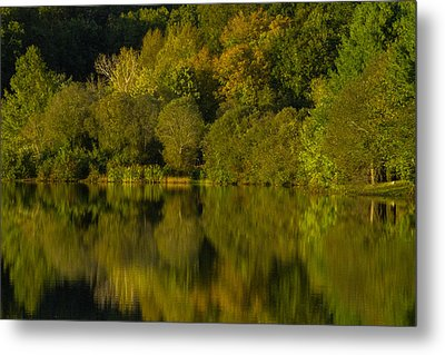 The Greens Of The Park Metal Print by Karol Livote